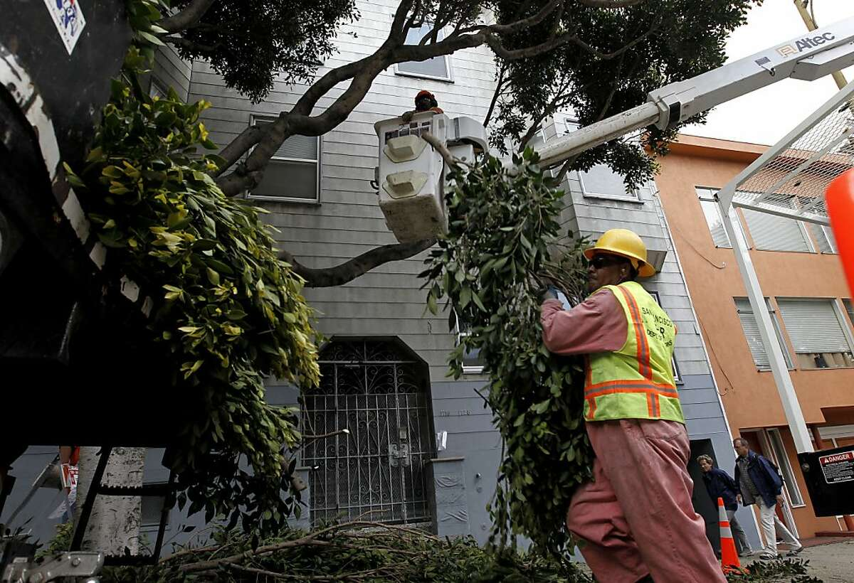 A panorama of the San Francisco Department of Public Works street tree maintenance crew working on Hyde Street in San Francisco.