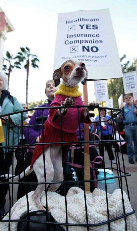 Sweat Pea, a Chihuahua mix, joined her owner, Beverly Conradson, at a rally Monday in Sacramento, Calif., supporting a bill to establish a Medicare for all/singlepayer health care system in the state. Photo: Rich Pedroncelli / AP