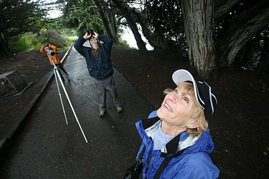 East Bay bird watcher volunteers from left,  Stephen Wiel, Ed Vine and Janet Bodle search the tree tops for birds at Aquatic Park in Berkeley, Calif. on Wednesday, January 19, 2011.   Hundreds of volunteer birders are tramping through parks, wetlands and neighborhoods beginning on Sunday to count and identify the region's fowl, on the first day of the annual Christmas Bird Count coordinated by a local chapter of the National Audubon Society Kat Wade / Special to the Chronicle Kat Wade / Special to the Chronicle Photo: Kat Wade, Special To The Chronicle