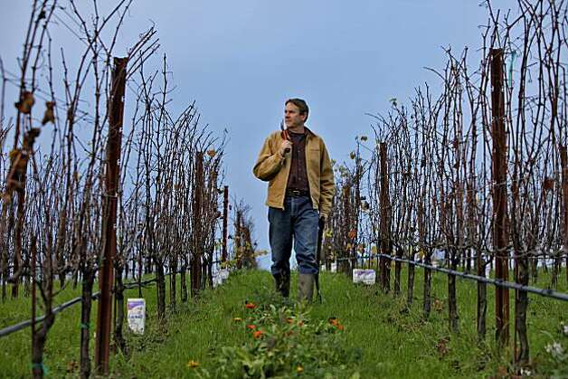 Ted Lemon owner and winemaker of Littorai Wines, walks among his 3 acres of vineyards, Monday Dec. 13, 2010,  in Sebastopol, Calif. In 2003 the Lemons purchased a thirty acre farm in which three are devoted to growing Pinot Noir and are specialized in Chardonnay and Pinots. Photo: Lacy Atkins, The Chronicle