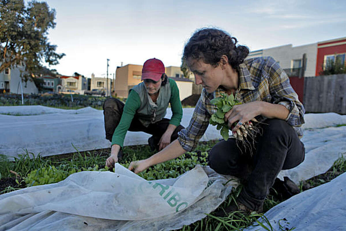 Brooke Budner, left and Caitlyn Galloway weed and harvest baby radishes in a 3/4 acre lot, Wednesday Dec. 15, 2010, in San Francisco, Calif. The two run the small business, Little City Gardens, that hopes to sell the produce it grows, but with current city zoning have been prohibited to do so.
