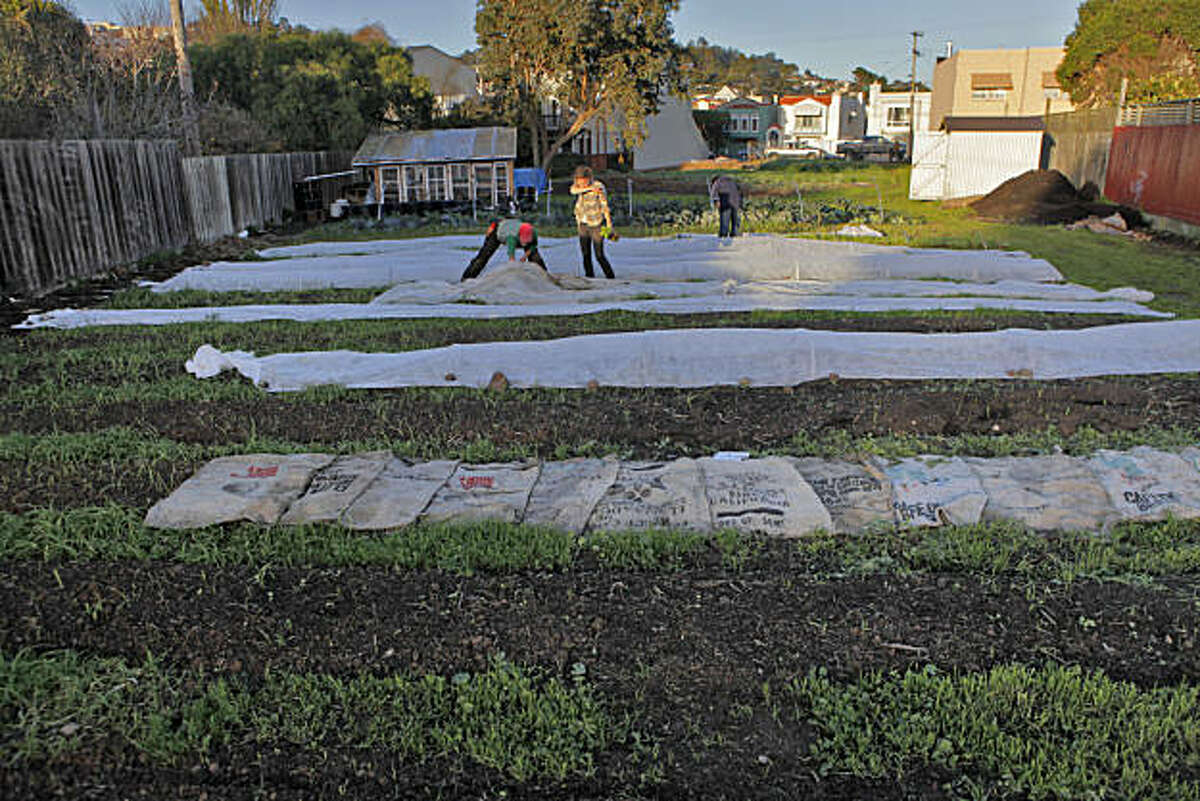 Brooke Budner, left and Caitlyn Galloway weed and harvest the baby radishes in a 3/4 acre lot, Wednesday Dec. 15, 2010, in San Francisco, Calif. The two run the small business, Little City Gardens, that hopes to sell the produce it grows, but with current city zoning have been prohibited to do so.
