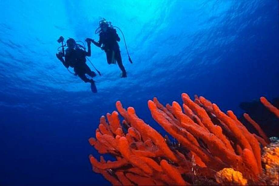 Divers swim above coral. Photo: Shutterstock.com