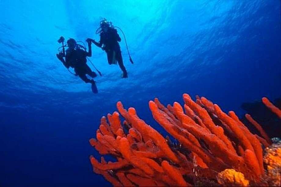 Divers swim above coral. Photo: Shutterstock.com