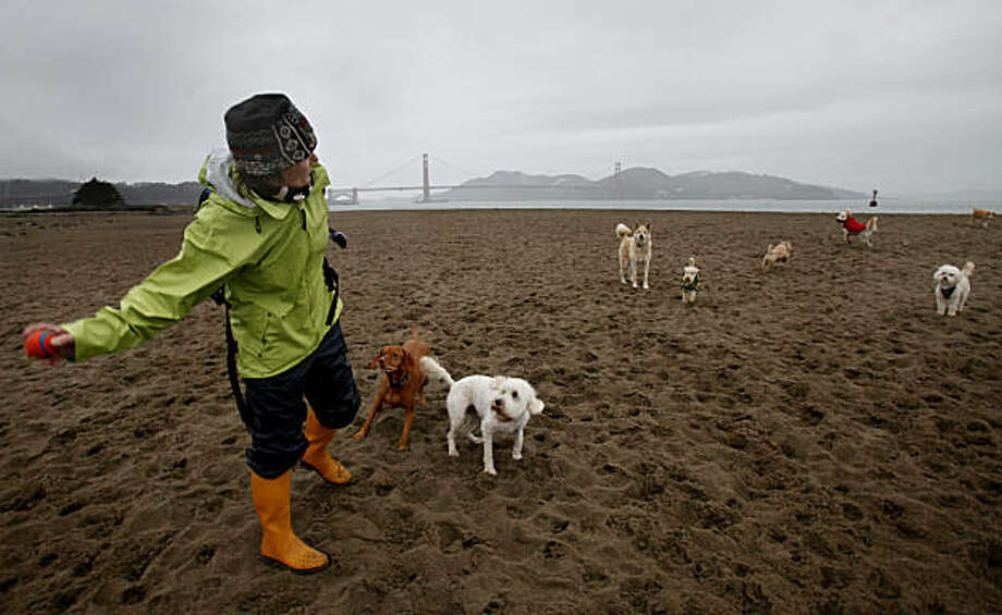 Kate Corcoran got the attention of her dogs at East Beach in San Francisco, Calif. despite a steady rain.  Rain or shine Corcoran always walks her dogs, it's her job. Another day of rain Tuesday December 14, 2010 in the San Francisco Bay area was a nuisance, but forecasters are calling for a bigger system this weekend. Photo: Brant Ward, The Chronicle