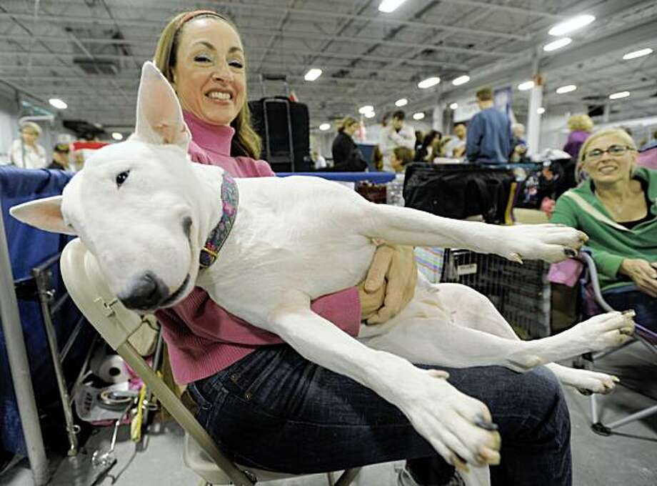 Janie Killion holds her English Bull Terrier named Zulu as they rest between judging rounds at the National Dog Show hosted by the Kennel Club of Philadelphia  Saturday, Nov. 14, 2009 in Oaks, Pa. Photo: Bradley C Bower, AP
