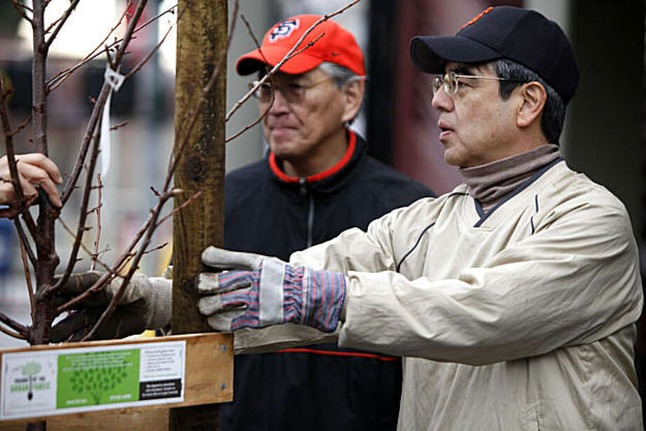 Allen Okamoto, left who is co-chairman of the Kanrin Maru, the 150th anniversary of Japan's first official delegation to the United States, and Japanese Consul General Hiroshi Inomata put the finishing touches on a tree Saturday Dec 4, 2010 that they helped plant. The first set of thirty-five trees of the 150 cherry trees slated for the project in San Francisco's Japan town were planted along Post and Buchanan Streets Saturday. Photo: Lance Iversen, The Chronicle