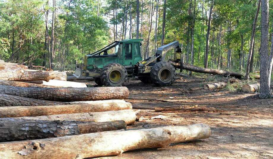 DAVID HOPPER: FOR THE CHRONICLE DEAD WOOD: A logger drags a cut tree during the logging and removal of dead trees in the Jones State Forest. The forest is closed during the tree removal. Photo: David Hopper / freelance
