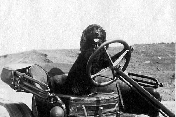 The Paine family dog of early Spruce Street gets his training in steering an early model of a horseless carriage. Note how this vehicle is a one seater. Photo from Richard Schwartz's book 'Berkeley 1900: Daily Life at the Turn of the Century.'