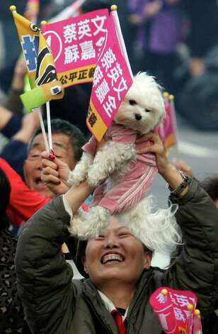 A supporter of Democratic Progressive Party's Presidential candidate Tsai Ing-wen with a pet dog cheers during a presidential campaign rally in Taichung, Taiwan, on Tuesday. Taiwan will hold its presidential election on Saturday. Photo: AP