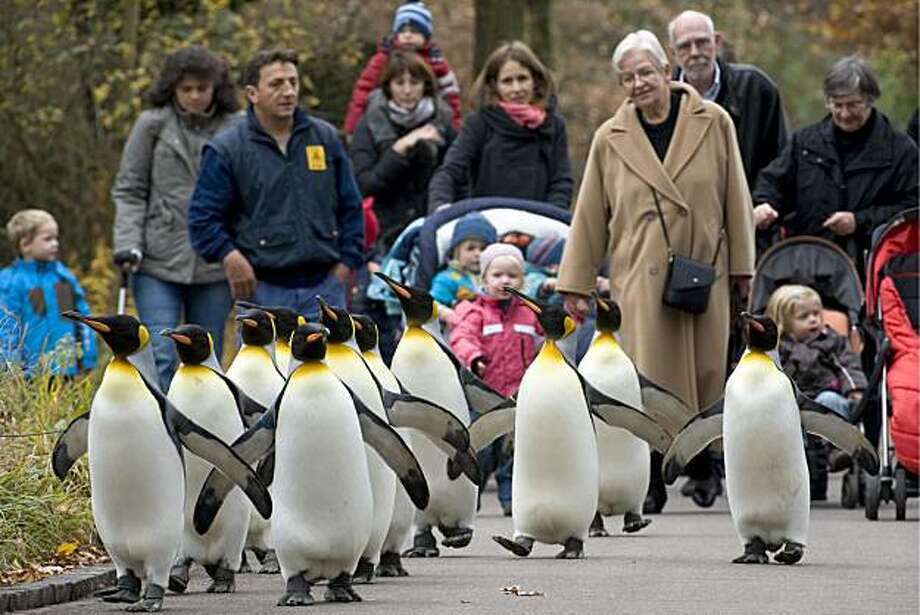 Answer 30:Basel, Switzerland (pictured here are penguins at its zoo.) Its downtown is in Switzerland, but its suburbs lie in France andGermany. Photo: Georgios Kefalas, AP