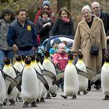 Answer 30:Basel, Switzerland (pictured here are penguins at its zoo.) Its downtown is in Switzerland, but its suburbs lie in France andGermany.