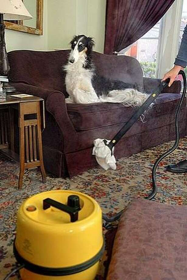 Christie Keith steams her carpet under the supervision of her dog, Kyrie, an 11-year-old Borzoi. Photo: Courtesy Of PetConnection.com