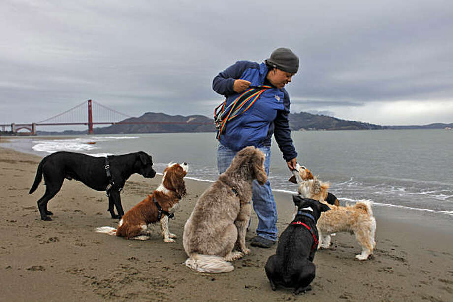 "Angela Gardner from ""All About Paws"", gives treats to her afternoon group of six as they walk along Crissy Field, Tuesday Feb. 15, 2011, in San Francisco, Calif. Photo: Lacy Atkins, The Chronicle"