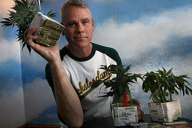 Manager Larry Richards holding up a marijuana plant in the lounge area of the pot dispensary at Cafe Blue Sky in downtown Oakland, Calif., on Monday, January 31. The dispensary is part of the Oaksterdam complex and Richards has been managing the downtown business for over nine years. Photo: Liz Hafalia, The Chronicle