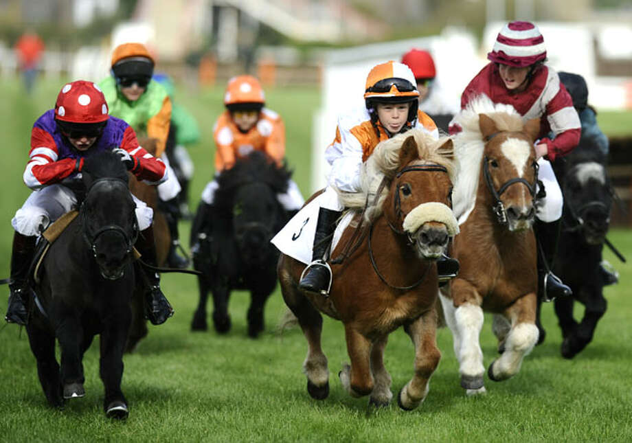 Shetland pony racing at Plumpton racecourse on October 18, 2010 in Plumpton, England Photo: Alan Crowhurst, Getty Images