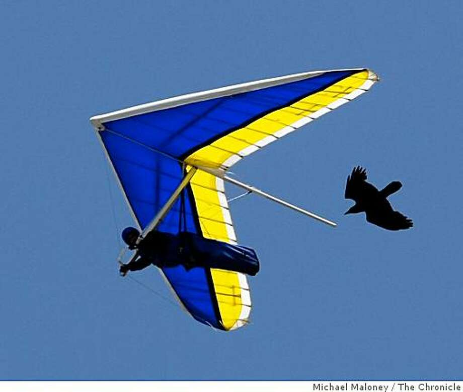 A hang glider soars along the beach cliffs of Fort Funston in San Francisco, Calif., followed by a black bird on April 20, 2008. Photo: Michael Maloney, The Chronicle