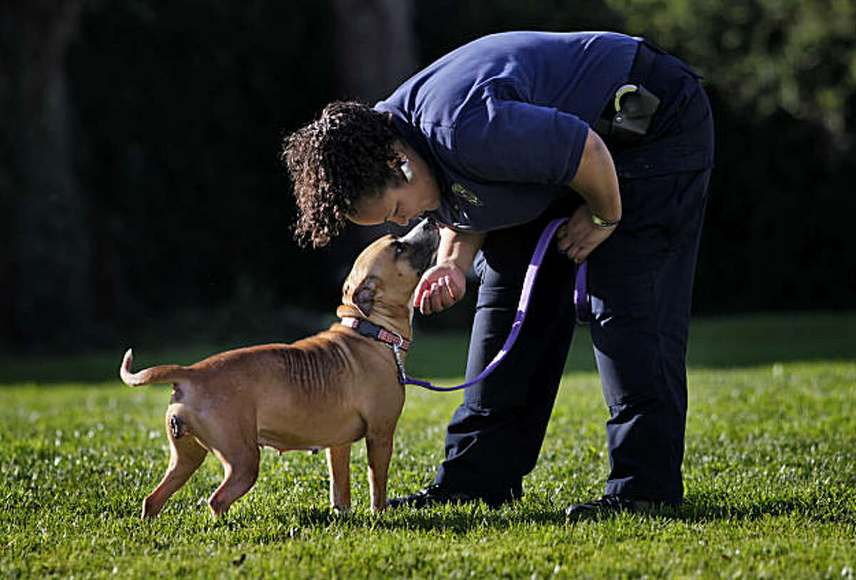 """Officer Sarah Whitmeyer talks with """"Amarylis"""" during her exercise period at the Oakland Animal Shelter, Wednesday January 26, 2011 in Oakland, Calif. Joni was one of the 33 dogs that was picked up December 9 in one of the largest dog-fighting raids in Oakland's history."""