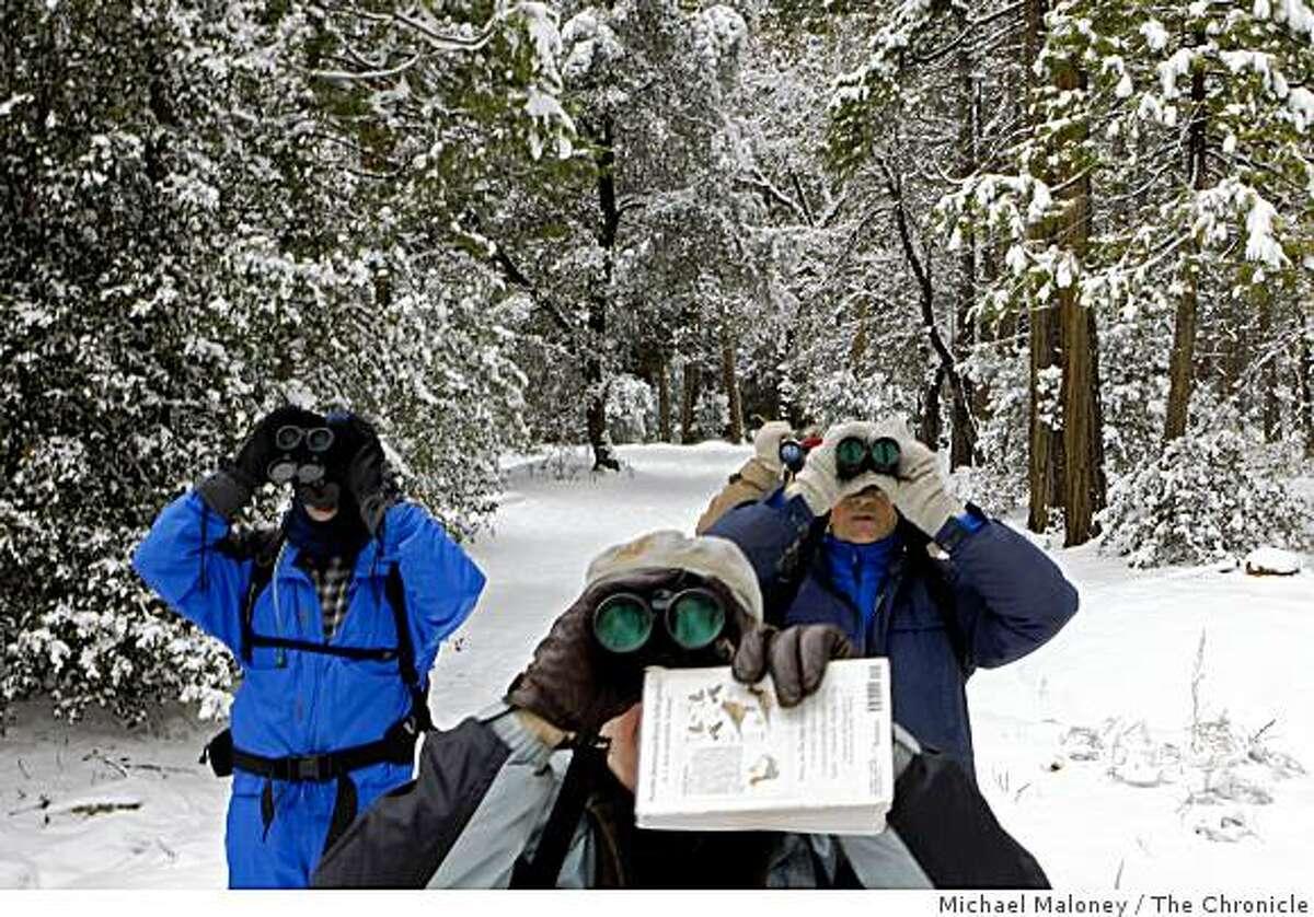 From front, bird count volunteers Len McKenzie, Paul Oldale, Lowell Young, and Stanley Valim, look for birds in Yosemite Valley on December 14, 2008.