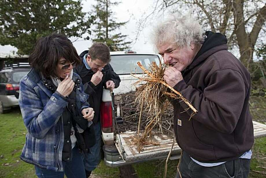 Dominique Crenn, Scrivner Hoppe-Glosser and Greg Glosser sample a root they foraged at the Gouge Eye Farm on December 26, 2010 in Pleasant Grove, Calif.  Photograph by David Paul Morris/Special to the Chronicle Photo: David Paul Morris, Special To The Chronicle