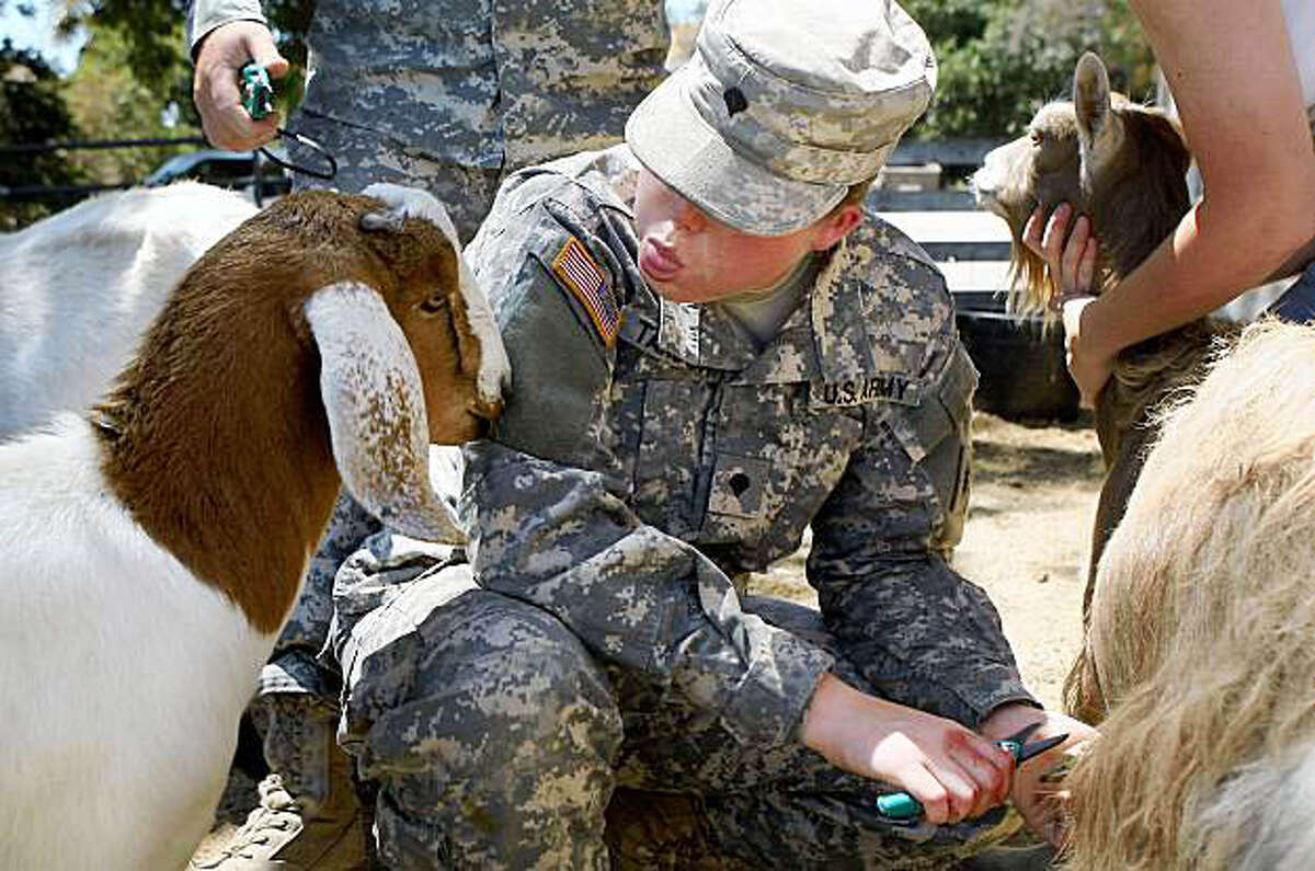 POMONA, CA - AUGUST 6: Spc. Kathy Tanson sticks her tongue out at a goat that keeps nudging her while she tries to trim the hooves of another goat as members of the California National Guard's 40th Infantry Division, based in Los Alamitos, California, receive training in agricultural skills at California State Polytechnic University, Pomona (Cal Poly Pomona) for an upcoming mission in Afghanistan, August 6, 2009 in Pomona, California. As part of an Army counterinsurgency effort, the 18 members of the Agribusiness Development Team (ADT) hope to diminish Taliban influence and reduce opium poppy production in Afghanistan by teaching farmers more efficient and productive ways to grow crops and raise animals. (Photo by David McNew/Getty Images)