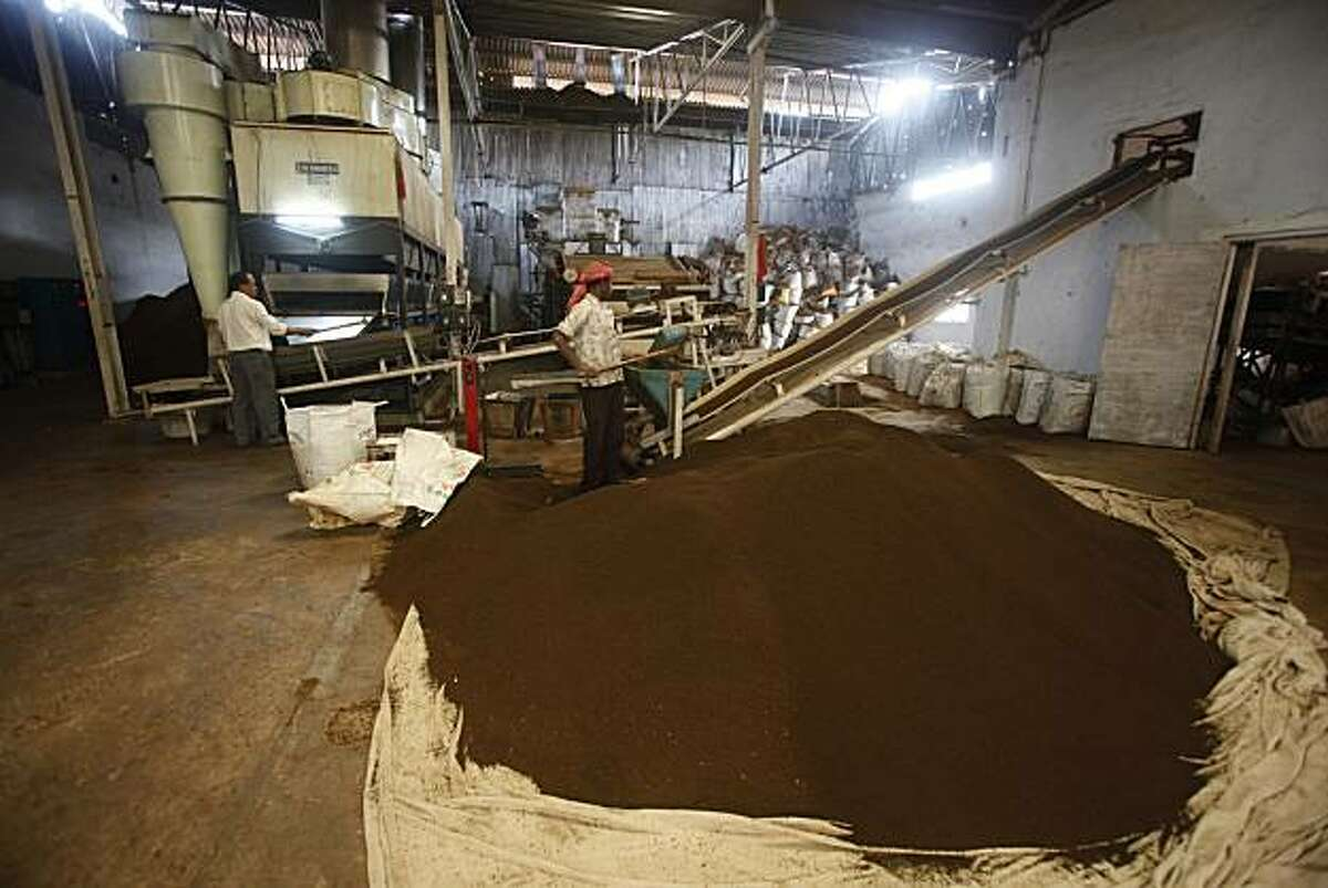 Indian laborers process tea at a factory in Amchong tea estate, about 45 kilometers (28 miles) east of Gauhati, India, Friday, Dec. 31, 2010. Tea growers in northeastern India say climate change has hurt the country's tea crop, leading not just to a dropin production but also subtly altering the flavor of their brew.