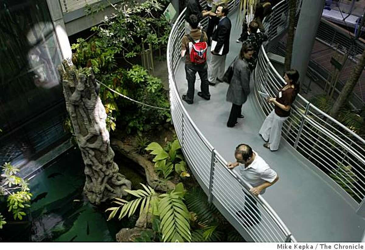 A walkway winds through the Rainforests of the World at the Academy of Sciences on Thursday Sept. 18, 2008 in San Francisco,Calif.