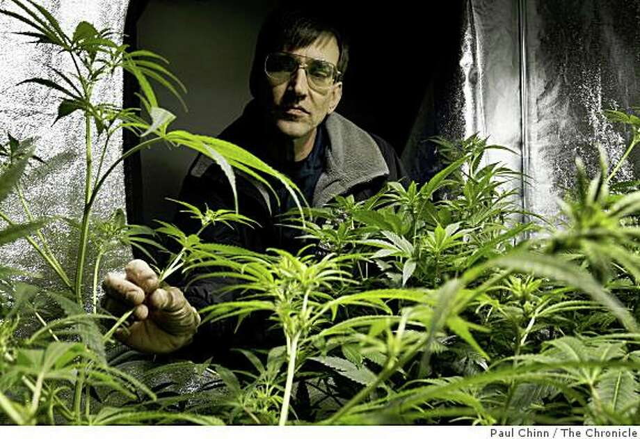 Richard Lee, president of Oaksterdam University, monitors the growth of a marijuana crop at the school's indoor growing lab in Oakland, Calif., on Friday, April 10, 2009. Photo: Paul Chinn, The Chronicle