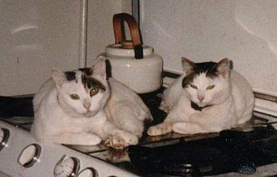 Jezebel the Acupuncture Cat, left, with her mother, Luna, engaged in one of her other hobbies, cooking. Photo: Christie Keith