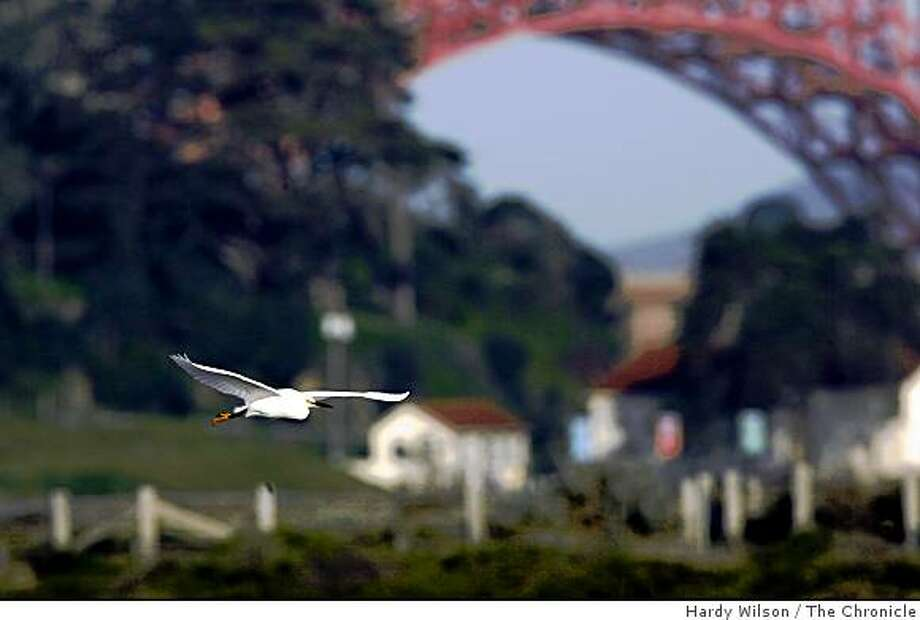 A Snowy Egret flies near Crissy Field in San Francisco, Calif., on Thursday, March 19, 2009. Photo: Hardy Wilson, The Chronicle