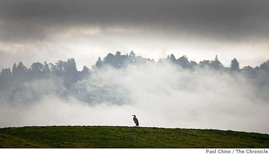 The Berkeley hills are shrouded in fog behind a great blue heron who has a hill all to itself at Cesar Chavez Park in Berkeley, Calif., on Thursday, Jan. 22, 2009. Photo: Paul Chinn, The Chronicle