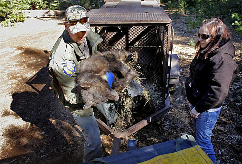 Rehabilitated orphaned bear cub hibernating sfgate for Calif fish and game