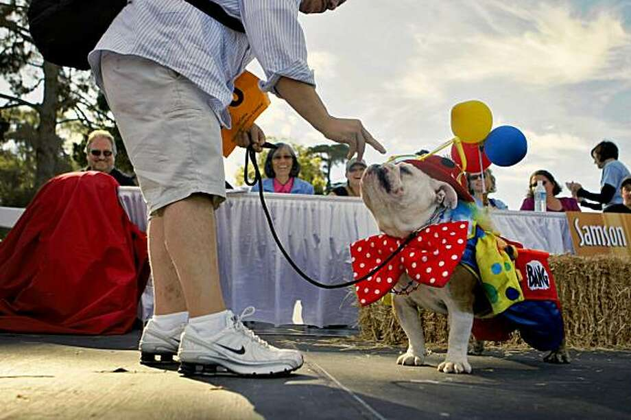 George Flores introduces his dog, Rudy, to the judges of the costume competition at Pet Pride Day on Sunday in San Francisco's Golden Gate Park. Rudy won third place. Photo: Lacy Atkins, The Chronicle