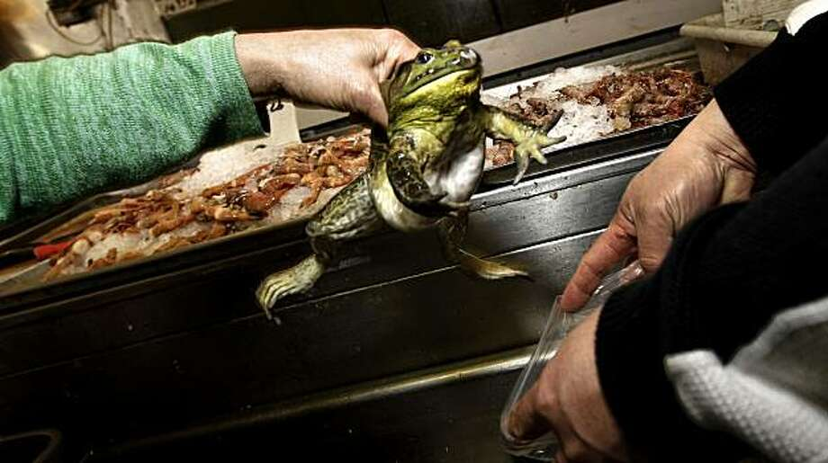 Ban on live turtle frog sales assailed sfgate for Fish store san francisco