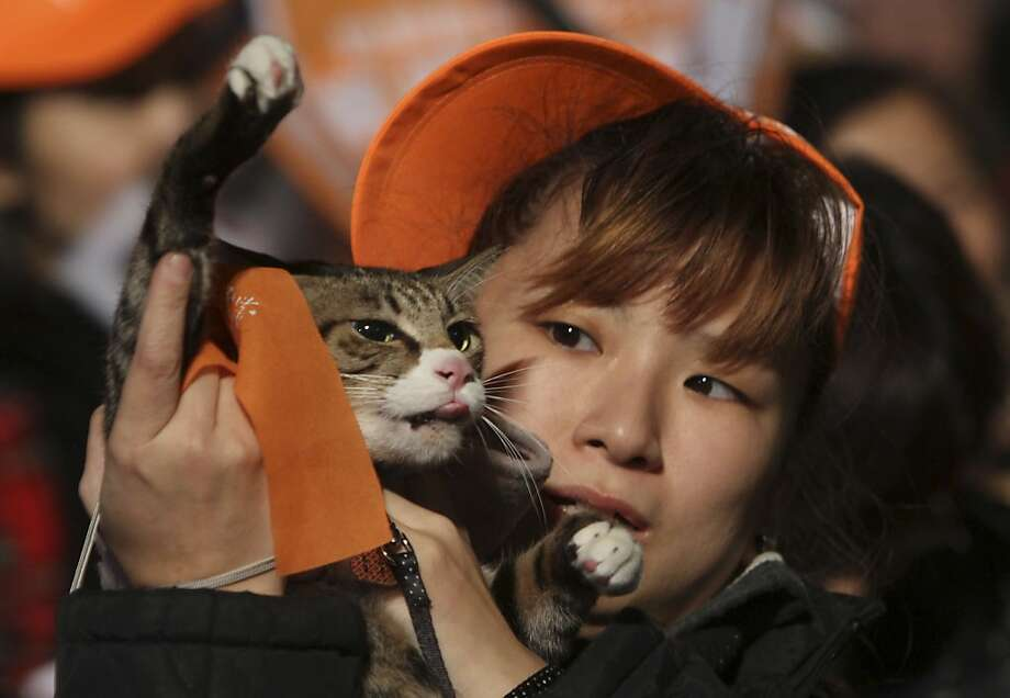 A supporter of People First Party's presidential candidate James Soong cheers with her cat during a presidential campaign rally in Taipei, Taiwan, Wednesday, Jan. 11, 2012. Taiwan will hold its presidential election on January 14, 2012. Photo: Chiang Ying-ying, Associated Press