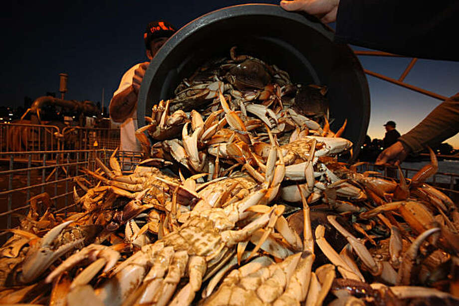 "Captain John Atkinson brings in the first 9,000 pounds of crab to Albers Seafood at pier 45 aboard his sports fishing boat ""New Rayann"" for the opening of the Dungeness crab season in San Francisco, Calif.., on Tuesday, November 16, 2010.   Kat Wade / Special to the Chronicle Photo: Kat Wade, Special To The Chronicle"