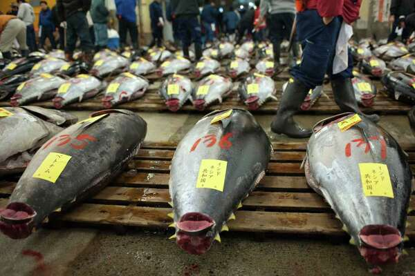 Tuna is laid out for inspection prior to the year's first auction at Tsukiji Market in Tokyo, Japan, on Thursday, Jan. 5, 2012. Kiyomura K.K., a Tokyo-based sushi chain operator, paid a record 56 million yen ($730,000) for a whole tuna, the first Japan-based winner of the New Year auction at the capital's main fish market in four years. Photographer: Akio Kon/Bloomberg