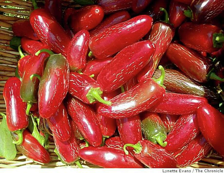 A salmonella strain found in a Mexican -grown Jalapeno at a Texas plant has prompted new FDA warnings. Photo: Lynette Evans, The Chronicle