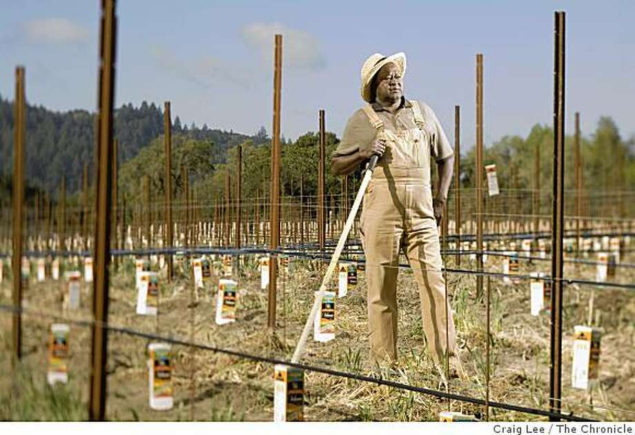 Mac McDonald, owner and winemaker at his Vision Cellars vineyard in Forestville, Calif., on April 16, 2008. He uses orange cartons to protect his growing young grape vine buds. Photo: Craig Lee, The Chronicle