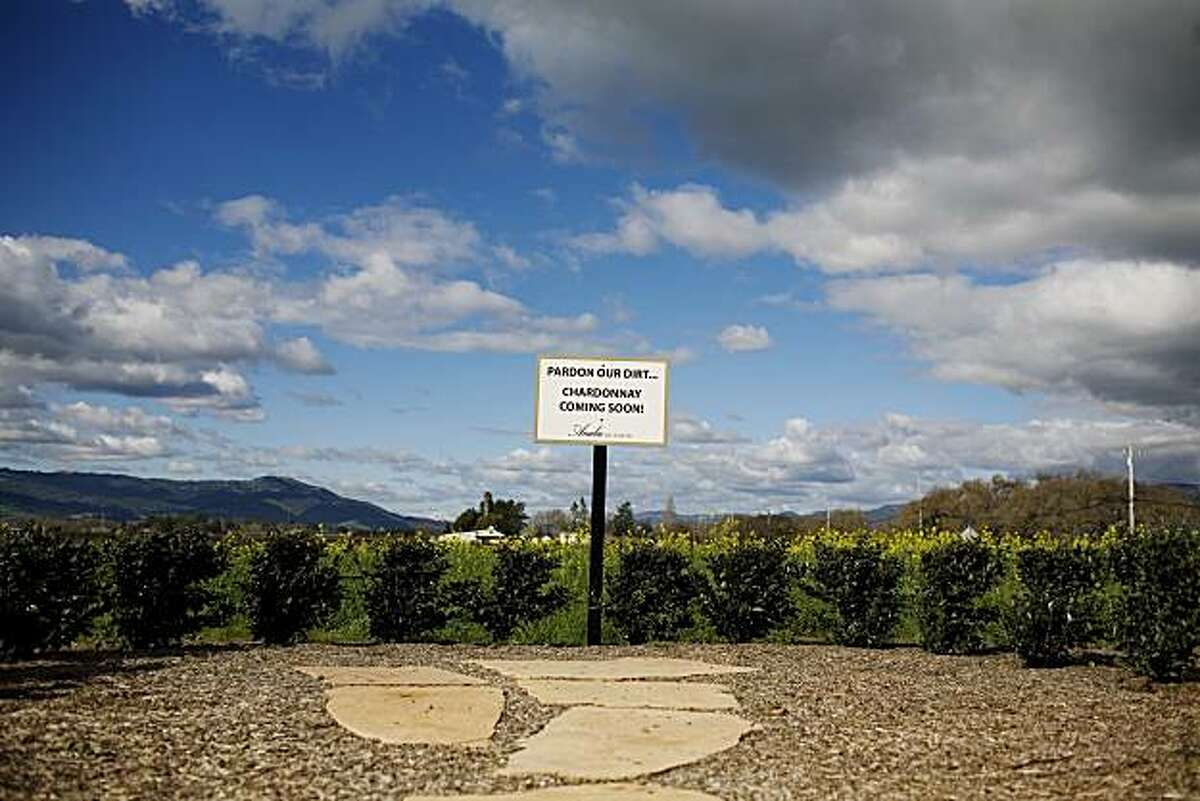 A sign announcing the arrival of a chardonnay vineyard stands in front of a field of mustard flowers, at Anaba Winery, which opened eight months ago at the intersection of highways 121 and 116, in Sonoma, Ca., on Saturday, Feb. 6, 2010.