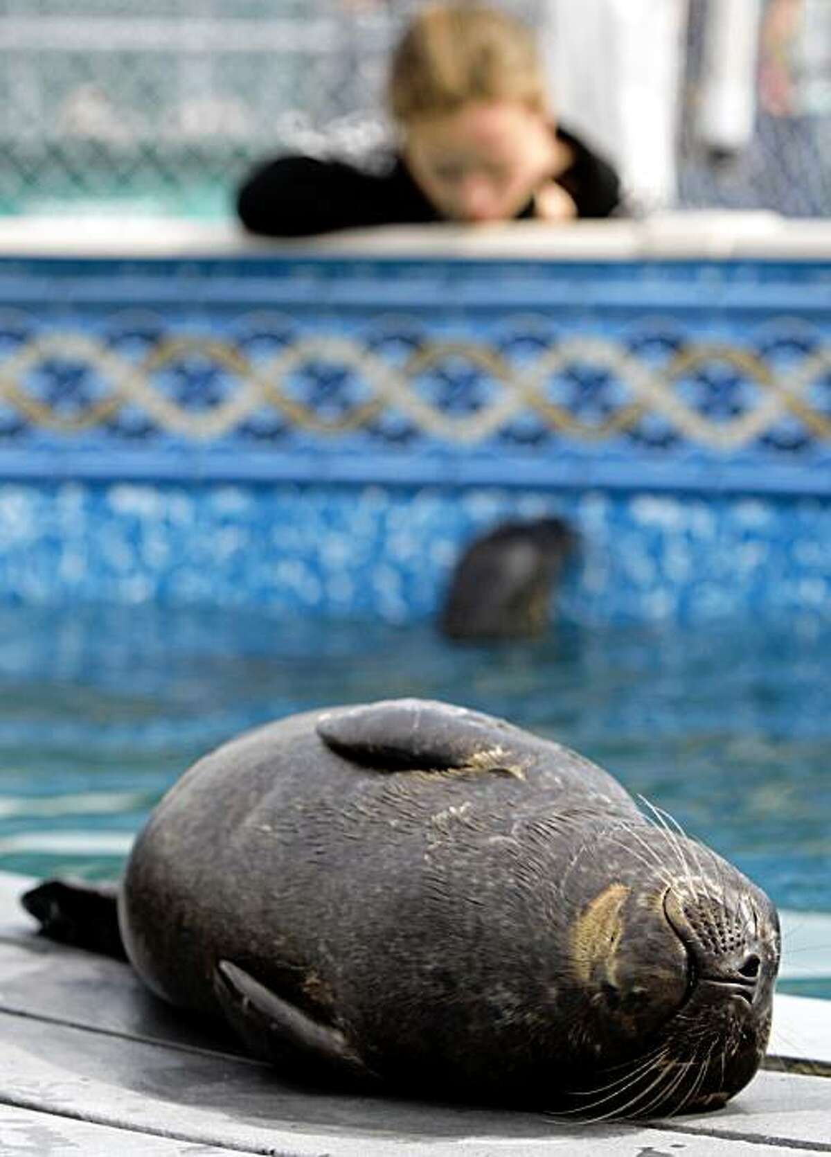 A rescued seal pup sleeps on a platform in a pool during an open house at the Vancouver Aquarium's Marine Mammal Rescue Centre in Vancouver, B.C., on Wednesday, Aug. 26, 2009. The center has cared for more than 2,000 sick, injured, abandoned and orphaned marine mammals since the program began.