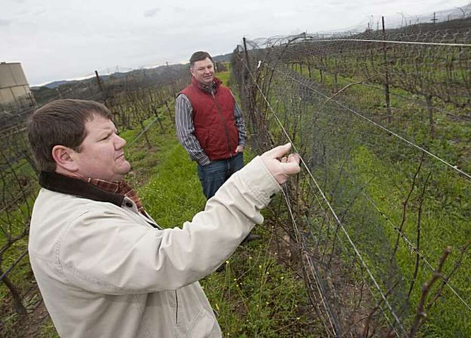 Viticulturist and 9th-generation land owner James Ontiveros, red jacket, talks with his college friend and now winemaker, Paul WIlkins, about the best ways to protect their crop from birds for the upcoming season at Rancho Ontiveros Vineyard in Santa Maria, Calif.  The land that Rancho Ontiveros Vineyard looks over is a parcel of the original Mexican land grant owned by James' great-great-great-great-great grandfather and was originally used as a cattle ranch.  Now is used to grow Pinot Noir grapes for Native9 and Alta Maria labels. Photo by Nick Lucero/SPECIAL TO THE CHRONICLE Photo: Nick Lucero, Special To The Chronicle
