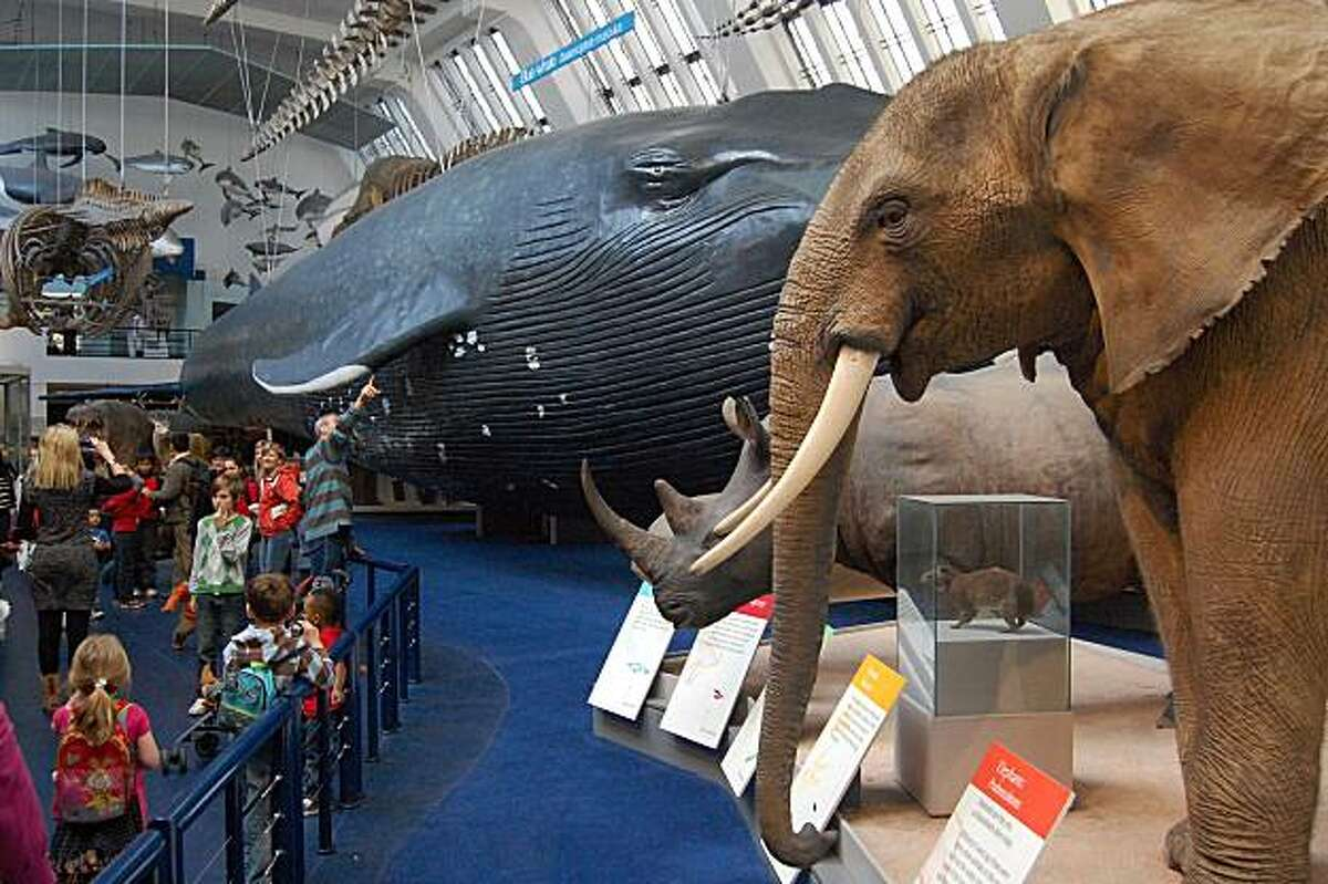 At the Natural History Museum, the Life Galleries exhibits cover everything from small creepy-crawlies to giant mammals.