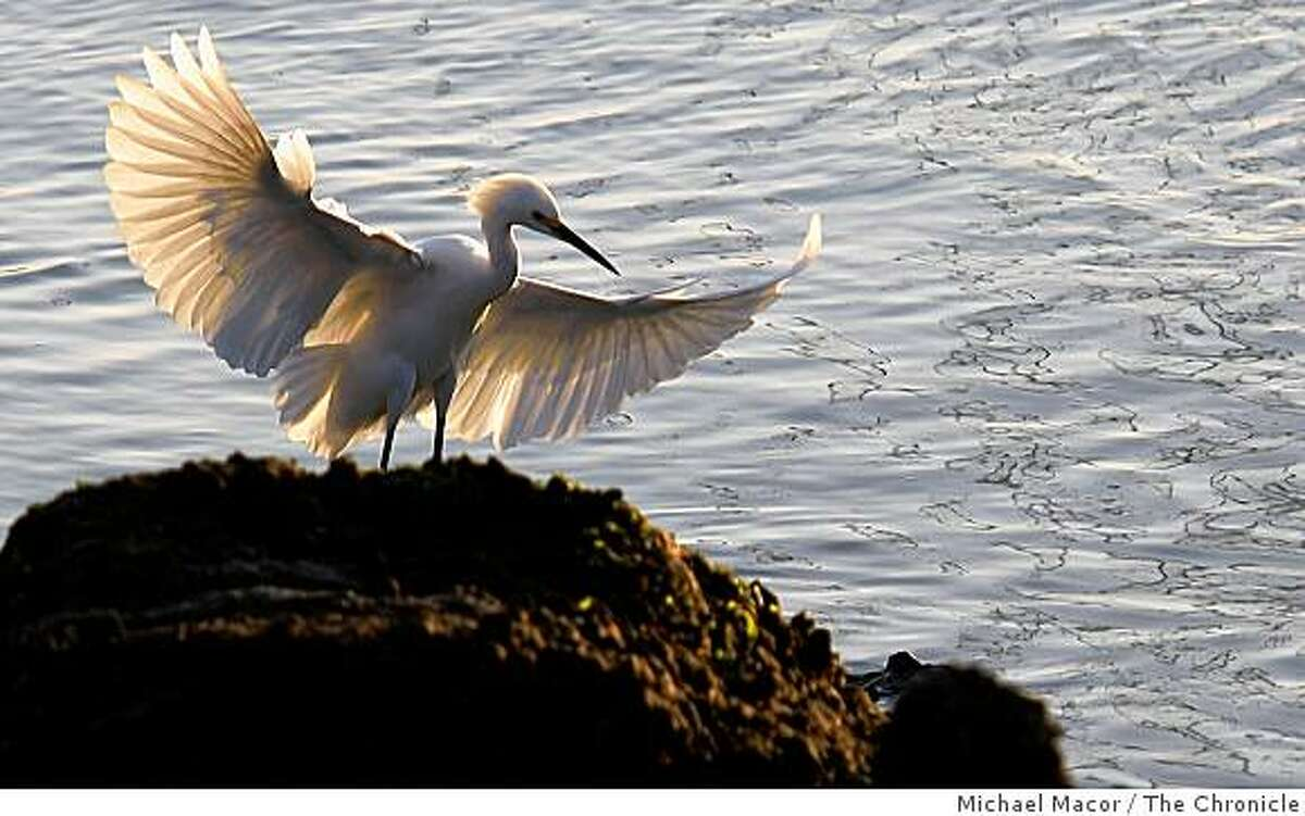 A bird lands atop a rock along the edge of San Francisco Bay in Larkspur, Calif. on Tuesday Dec. 9, 2008,