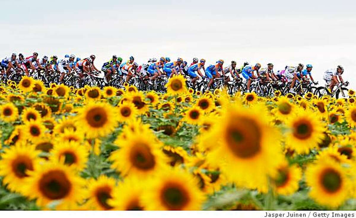 The peloton passes a field of sunflowers during stage ten of the 2009 Tour de France from Limoges to Issoudun in Issoudun, France.