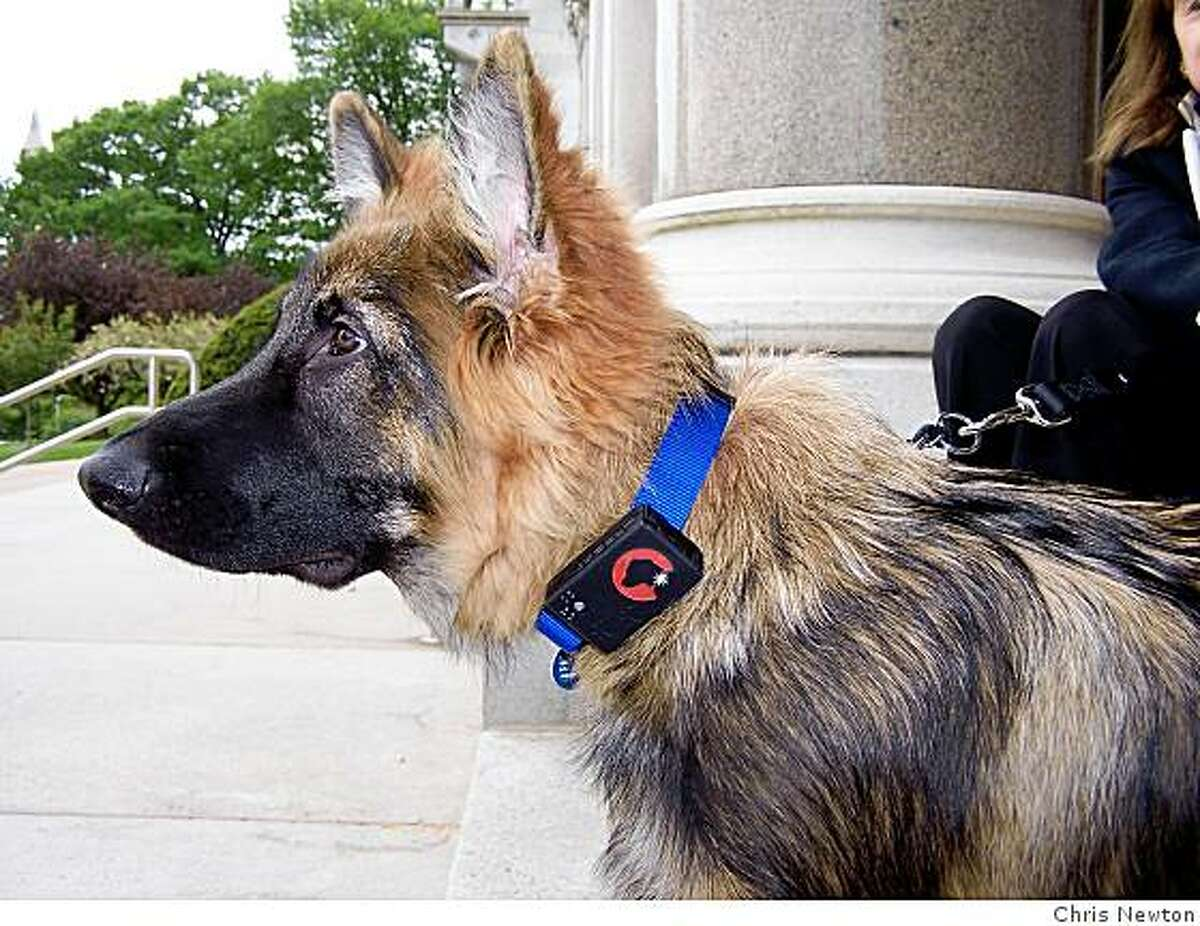 Peaches, a 5-month-old German Shepherd from West Hartford, Conn., modeling the SpotLight GPS device.