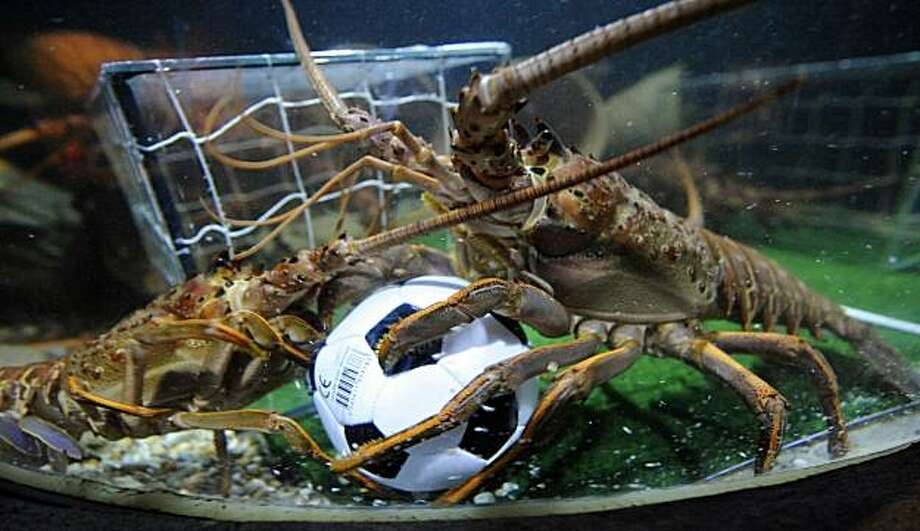 Two langoustines fight for a football in their basin decorated like a soccer pitch on June 16, 2010 at the Sea Life aquarium in Berlin. During the FIFA Football World Cup which is taking place until July 11, 2010 in South Africa, the langoustines get every afternoon a small football filled with sardines in their aquarium. Photo: Barbara Sax, AFP / Getty Images