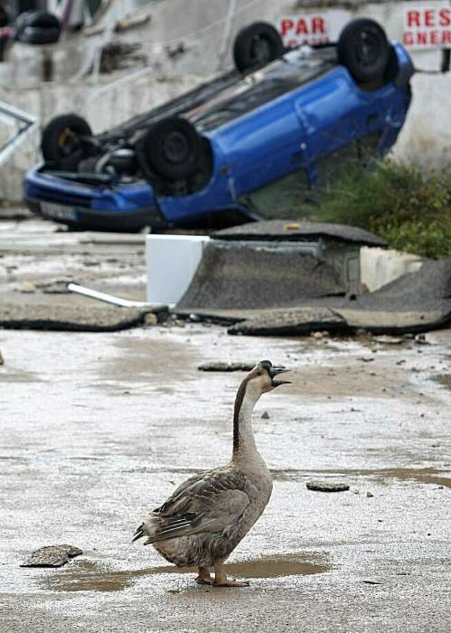 A goose walks through a street of Draguignan, southern France, Wednesday, June 16, 2010. Regional authorities in southeastern France say more than a dozen people have been killed and many are missing in the aftermath of flash floods that followed powerfulrainstorms. Unusually heavy rains recently in the Var region have transformed streets into muddy rivers that swept up trees, cars and other objects. Photo: Lionel Cironneau, AP