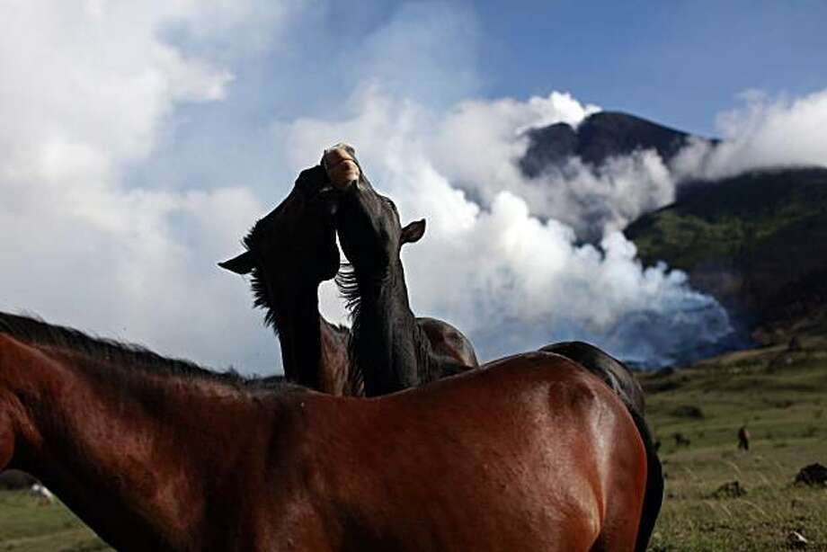 Two horses play next to the erupting Pacaya volcano in Villa Canales, 50 kms south of Guatemala City, Saturday, June 5, 2010. The volcano started erupting lava and rocks last May 27, forcing thousands of people to flee their homes and disrupting air traffic as ash drifted over major cities. Photo: Rodrigo Abd, AP