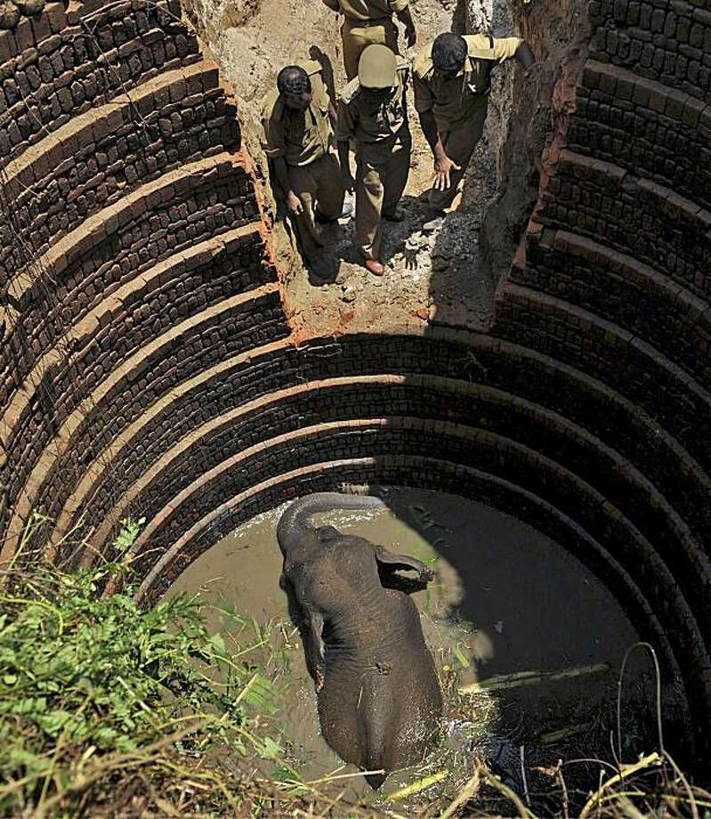 Indian forest officials prepare to rescue a wild elephant, a day after it fell into a well, in Palakkad, in the southern Indian state of Kerala, India, Saturday, June 5, 2010. Photo: AP